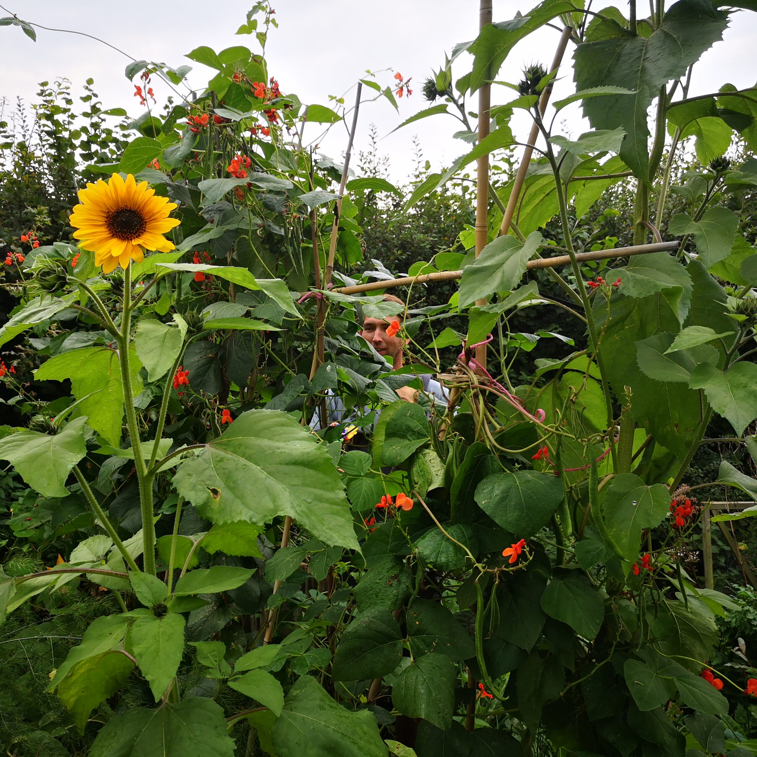 permaculture courses cornwall