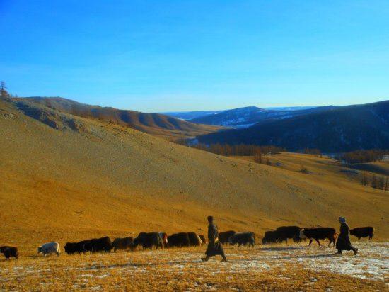 epic herding shot
